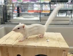 gabbie scoiattoli gabbie per gerbilli e scoiattoli news e vendita