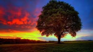 46 hd and qhd wallpapers of gorgeous trees 2 androidguys