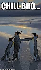 Chill Out Bro Meme - chill bro fighting penguins quickmeme