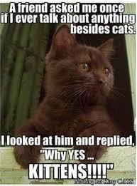 Funniest Cat Memes - funniest cat memes funny cat memes memes and cat
