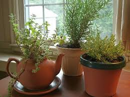 herbs indoors the truth about indoor herb gardening