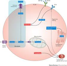Sle Of Privacy Policy Statement by Potential Metabolic Pathways Involved In B Cells In Sle