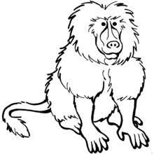 coloring elegant drawings baboons baboon monkey coloring