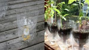 8 diy self watering planters using plastic bottles gardenoholic