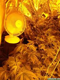 grow room oscillating fans critique my new grow room build please 420 magazine