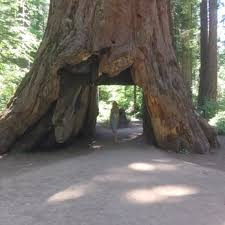 calaveras big trees state park 456 photos 195 reviews parks