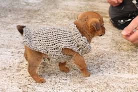 free knitting pattern for a puppy sweater handylittleme