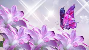 beautiful wallpapers of butterflies on wallpaperget com
