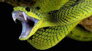 super snakes snake snake wallpaper and animal