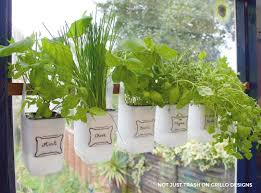 Bottle Garden Ideas Indoor Bottle Herb Garden From Recycled Milk Bottles Grillo