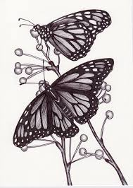 monarch butterflies by beckyholly drawings monarch butterfly