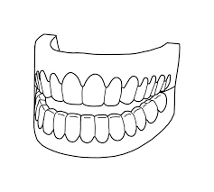 picture of full teeth in dental health coloring page color luna