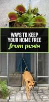 24 things that u0027ll tell pests to gtfo of your home and yard