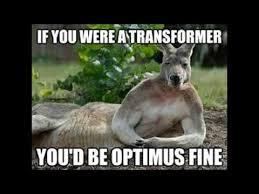 Funny Donkey Memes - transformer funny memes youtube