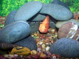 best 25 aquarium rocks ideas on pinterest fish tank amazing