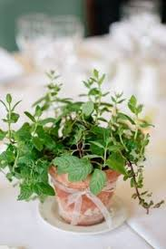 Potted Plants Wedding Centerpieces by This Is Exactly What I Want For Centerpieces Low White
