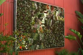 garden wall plants running out of room for plants fine gardening