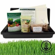 hydroponics wheatgrass growing kit soil free wheat grass kit