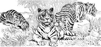 free tiger coloring pages coloring page