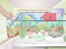 Decoration Of Fish Tank How To Decorate A Fish Tank 15 Steps With Pictures Wikihow