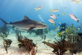 animal wallpaper murals wallpaper shark bait underwater square wall murals