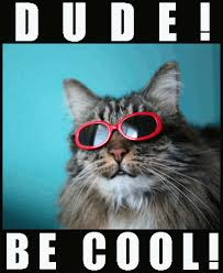 Cool Cat Meme - old folks maze and coloring page and funny cat gifs for