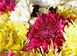 wedding flowers hd 274 best flowers images on flowers hd flower