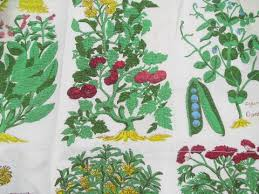 Vintage Style Kitchen Curtains by Kitchen Botanical Latin Herbs U0026 Vegetables Print Cafe Curtains