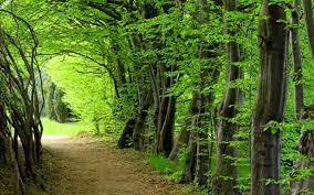 forest images Forest hd wallpapers wallpaper cave jpg