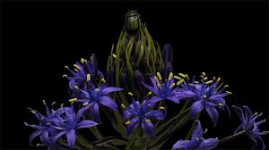 time lapse pairs blooming flowers with crawling insects colossal