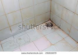 Mold Growing In Bathroom Dirty Bathroom Stock Images Royalty Free Images U0026 Vectors