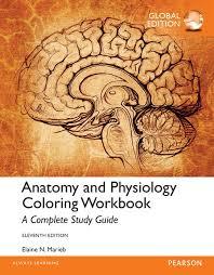 Study Guide Anatomy And Physiology 1 Marieb U0026 Brito Anatomy And Physiology Coloring Workbook A
