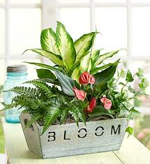 plant of the month club plant of the month club 12 months per delivery price 39 99