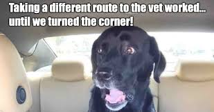 Dog Vet Meme - taking a different route to the vet worked weknowmemes