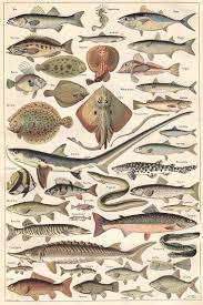 best 25 fish illustration ideas on pinterest animal