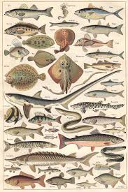 best 25 fish ideas on pinterest paleo fish recipes baked
