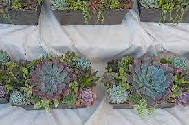succulent collection i dream of succuentsi dream of succuents