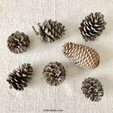 how to make a stunning teal pinecone ornament pet scribbles