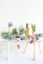74 best plant life images on pinterest plants indoor plants and