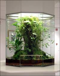 big terrarium for a tiny jungle at home arquitectura