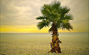 palm tree on the 2560 x 1600 nature photography
