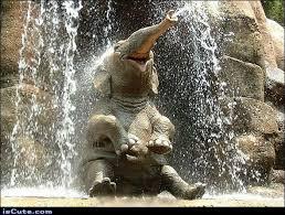 Elephant Meme - elephant shower iscute com
