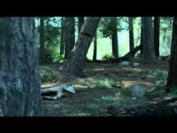 did you a tree does make a sound geico tv commercial