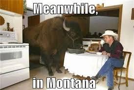 Montana Meme - meanwhile in montana memes and comics