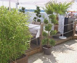 pflanzen fã r den balkon garten sichtschutz pflanzen hoch treefunder co