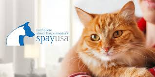 low cost spay and neuter services spayusa animal league