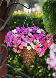 Hanging Plants For Patio Garden Design Garden Design With The Best Plants For Hanging