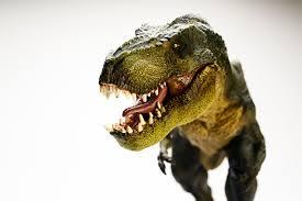 100 t rex wallpaper dinosaur hd wallpaper wallpapersafari