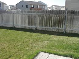 need help with shade and privacy trees along fence