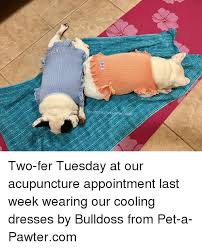 Acupuncture Meme - two fer tuesday at our acupuncture appointment last week wearing